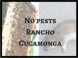No pests Rancho Cucamonga (1).pdf